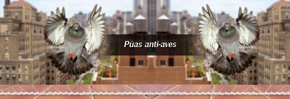 Púas anti-aves